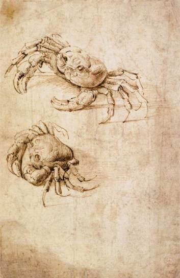 studies-of-crabs