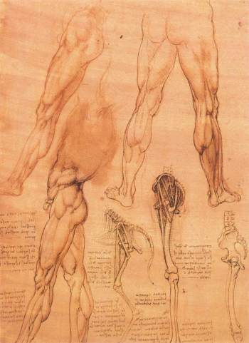 studies-of-legs-of-man-and-the-leg-of-a-horse