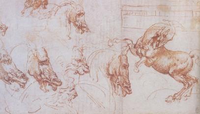 horse-studies