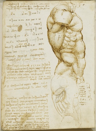 Recto: The male torso, with notes. Verso: The male torso, with n
