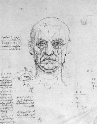study-on-the-proportions-of-head-and-eyes